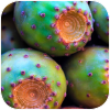 kaktu.png